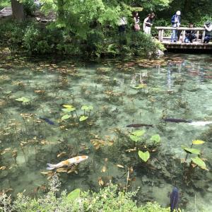 (岐阜県)モネの池