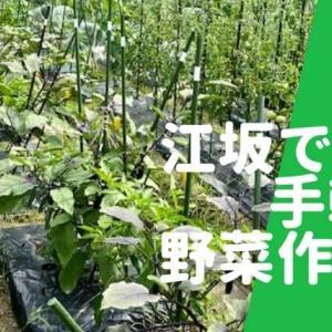 【江坂で農業】手ぶらで行ける話題のシェア畑|野菜作りが誰でも簡単に始められる!