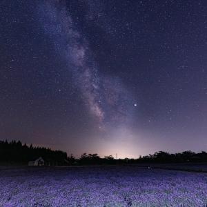 星読みの超シンプル12月の運勢を無料鑑定します🌼
