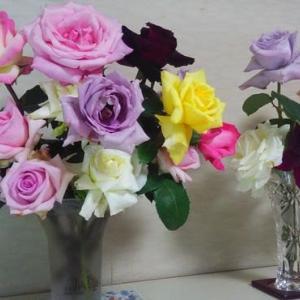 地植えのバラたちが魅せてくれます...゚+。:.゚ヽ(*´∀`)ノ゚.:。+゚