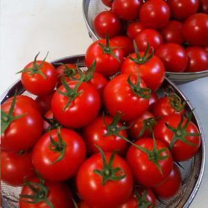 酷暑の毎日...トマトも最盛期を過ぎてきました。