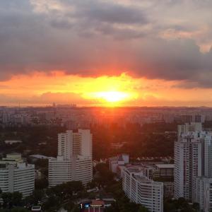 シンガポールより:街の様子と我が家の虫事情