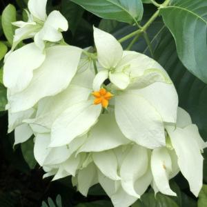 君の名は?シンガポールの道端に咲く熱帯の花から花が咲く?
