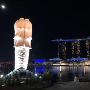 ついに!シンガポールリバーに住む野生のカワウソに遭遇!!