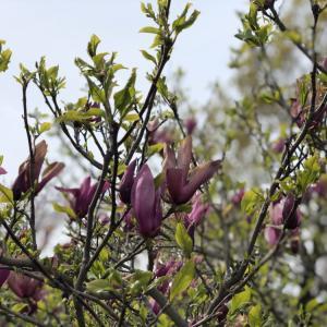 シンガポールから春に帰国するときに気をつけるべき自律神経の話