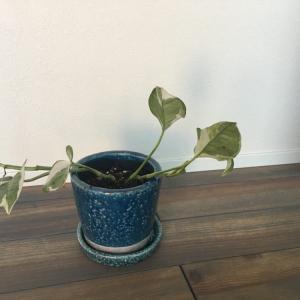 植物を育てるコツやポイント:メリットとデメリットも一挙公開