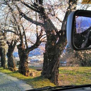 知る人ぞ知る桜名所 見晴らし抜群「宇宙桜」に思うこと