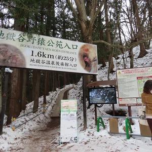 SNOW MONKEY!! 地獄谷野猿公苑① なんてかわいらしい!