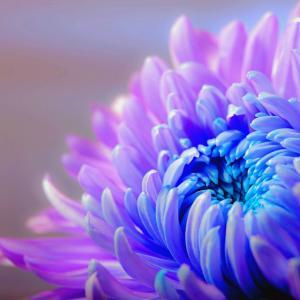 お花屋さんが節句とお花についてご説明します!