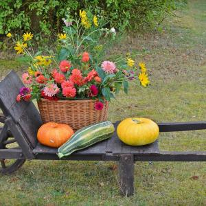 お花屋さんがおすすめする:11月にお部屋に飾りたいお花たち