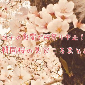 コロナの影響で桜祭り中止!?韓国桜の見どころまとめ