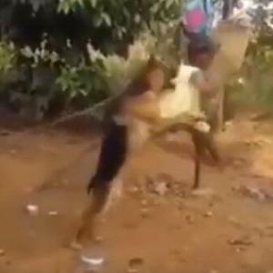 まるで家族!!子供が乗るブランコを押す犬