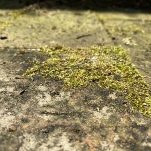 過ぎ去りし苔たち