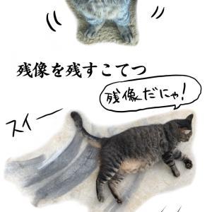 オヤジの奇行と動物写真!