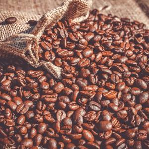 アラビカ種って何?という人必見!珈琲豆の三大原種を紹介!