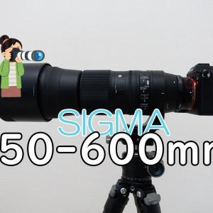α7Ⅲと一緒に買った超望遠レンズ「SIGMA 150-600mm F5-6.3 DG OS HSM」レビュー