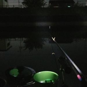へらぶな 坂川ナイター 10月20日