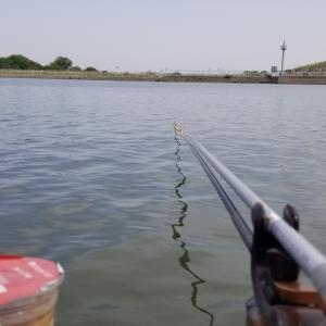 利根川水系江戸川・坂川の不調は・・・