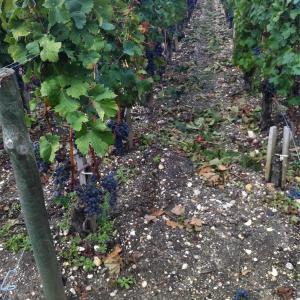 ボルドーとブルゴーニュ ワインの違いの背景