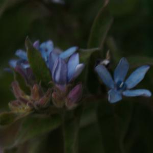 青い花とか