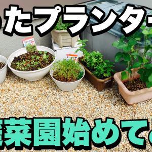 【家庭菜園デビュー】DAISO(ダイソー)で買える種を色々育ててみた。