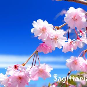 春のアルバム・・・桜