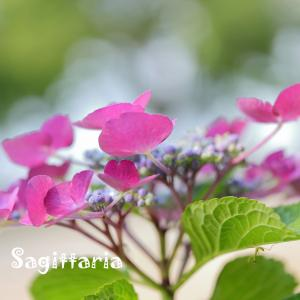 平成の森公園の花たち
