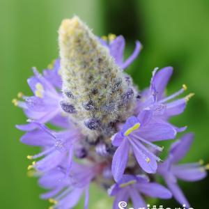 智光山公園の小さな花