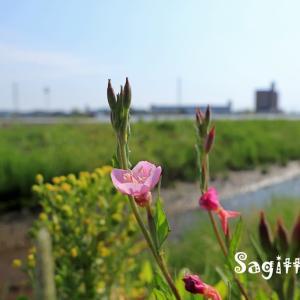 赤間川散歩⓫名無しの橋