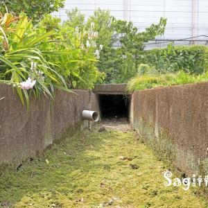 赤間川散歩⓭二丁町用水くだり