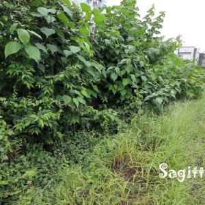 赤間川散歩⓮草むす二丁町用水