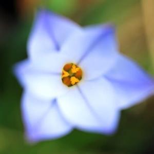 小さな花が咲いています