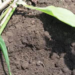 木炭の施用と合わせて何の緑肥のタネを蒔けばいい?