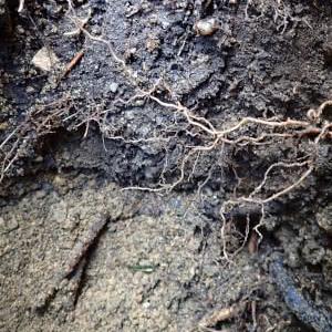 化学肥料を使うと土が壊れるということはどういうことかを考える