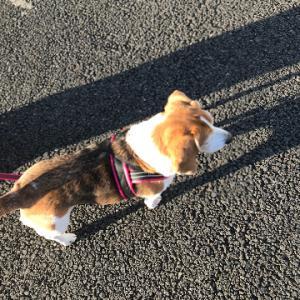 お散歩ボラ、終了