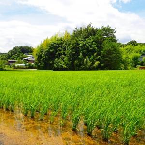 【妄想】日本に帰国したらやりたい事。ダチョウ牧場・ブドウ農園・珍しい野菜のネット販売