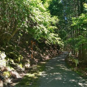 【FZ6】林道をただ走る身延ツーリング