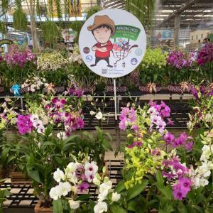 タイ・ナコンパトムにある蘭(ラン)の直販店『Air Orchids & Lab』をご紹介。
