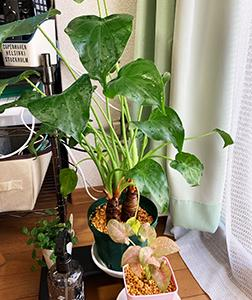 プロットを育てる【観葉植物とプロットの成長】