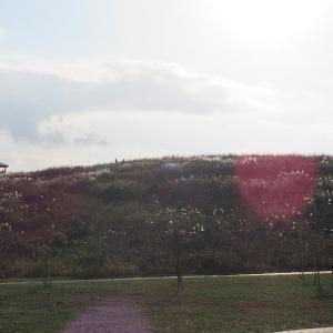 まつぶし緑の丘公園での移動運用
