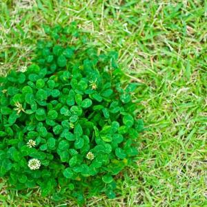 【魔除け植物】コロナ後の時代に合った植物は、コロナ除けおまじない植物よ! その5