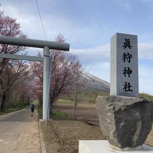 意外に遠かった桜並木の先の神社