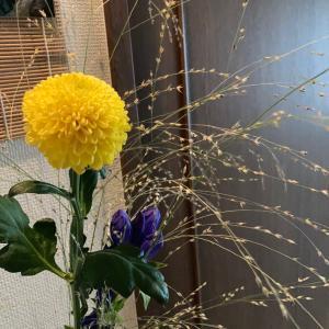 お花で楽しむ中秋の名月