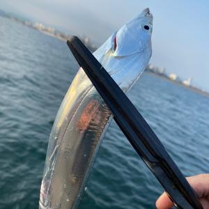 TSURINEWS大阪湾『波止タチウオ』好機到来 メタルジグで攻略【泉佐野一文字】