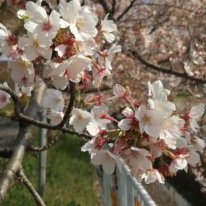 今日のお花(2020/04/04)