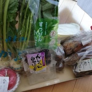 宅配野菜を買ってみた 届いたよ
