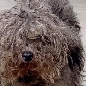 中国の凄腕トリマーが捨て犬を拾った結果…..