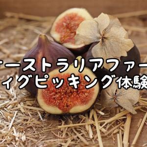 【オーストラリアファーム】フィグピッキング体験談