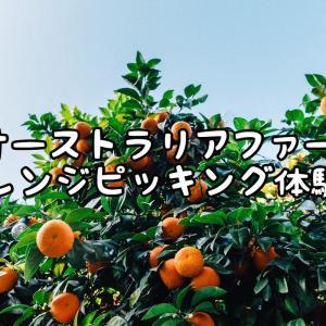 【オーストラリアファーム】オレンジピッキング体験談