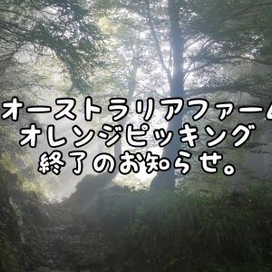 【オーストラリアファーム】オレンジピッキング終了のお知らせ。